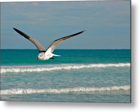 Coastal Metal Print featuring the photograph Gull In Flight by Valerie Tull