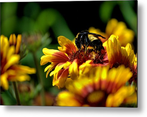 Bee Metal Print featuring the photograph Hard At Work by Chris Giese