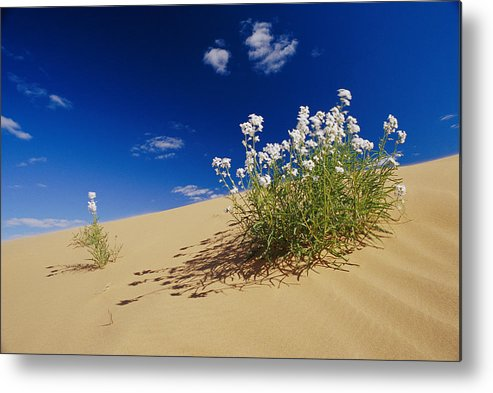 Australia Metal Print featuring the photograph Hearty Wild Stock Wildflowers Growing by Jason Edwards