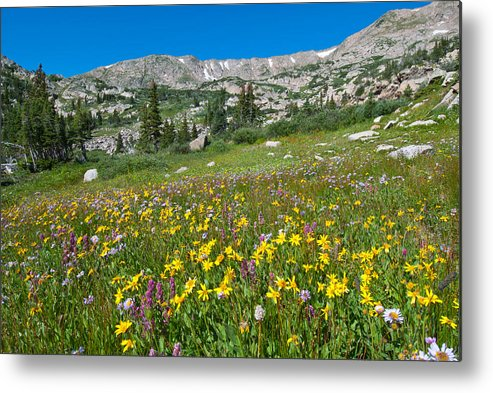 Wildflower Metal Print featuring the photograph Indian Peaks Wildflower Meadow by Cascade Colors