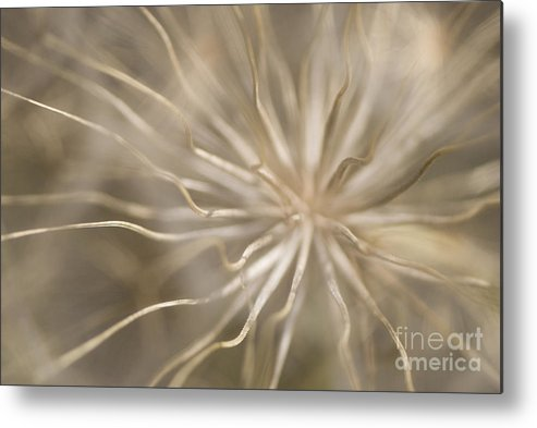 Andalucia Metal Print featuring the photograph Inside by Anne Gilbert
