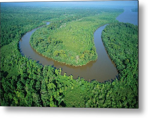 Jh Metal Print featuring the photograph Mangrove Forest In Mahakam Delta by Cyril Ruoso