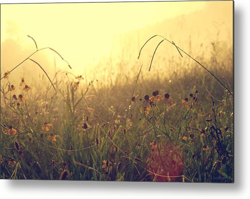 Sunrise Metal Print featuring the photograph Morning Fog by Sarah Rentrop