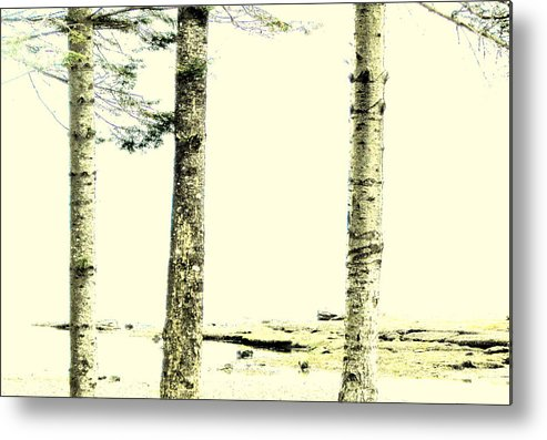 Trees Metal Print featuring the photograph Muted Tree Trio by Annie DeMilo