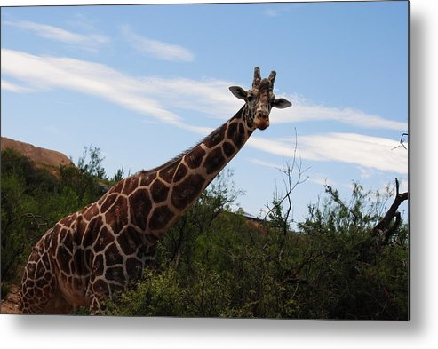 Out Of Africa Wildlife Experience Metal Print featuring the photograph Out Of Africa 3 by Paulina Roybal