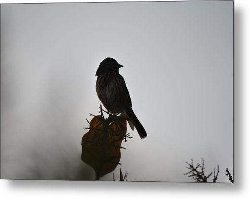 Bird Metal Print featuring the photograph Out Of The Fog by Paulina Roybal
