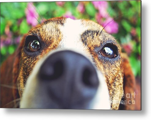 Funny Metal Print featuring the photograph Peek A Boo by Rachel Barrett