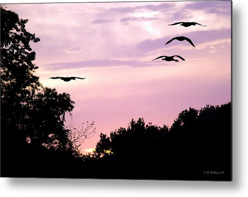 2d Metal Print featuring the photograph Pink Sunrise Geese Silhouette by Brian Wallace