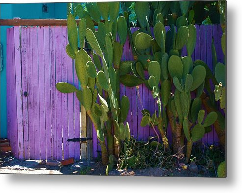 Cactus Metal Print featuring the photograph Prickly Pear Cactus by Richard Jenkins