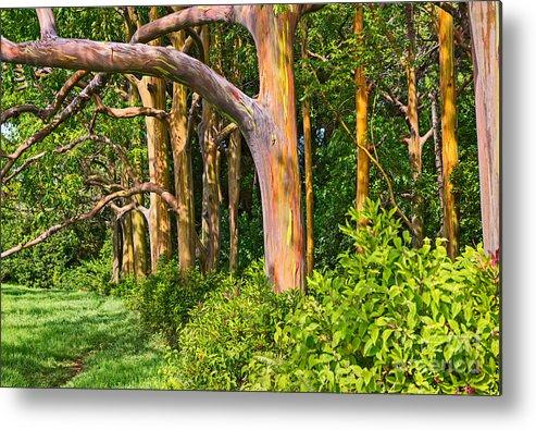 rainbow row eucalyptus trees of maui metal print by jamie pham