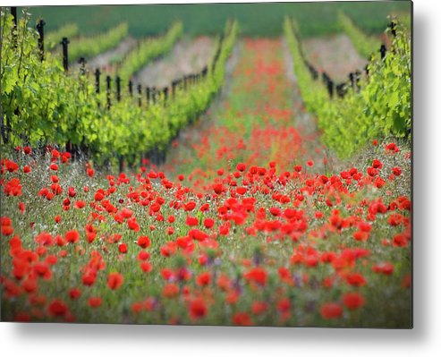 Landscape Metal Print featuring the photograph Red District by Ales Komovec