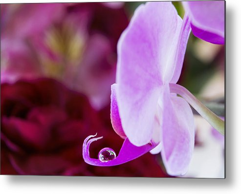 Orchids Metal Print featuring the photograph Reflections In A Water Drop by Dana Moyer