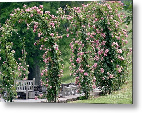 Roses Metal Print featuring the photograph Rose Arbor by Living Color Photography Lorraine Lynch