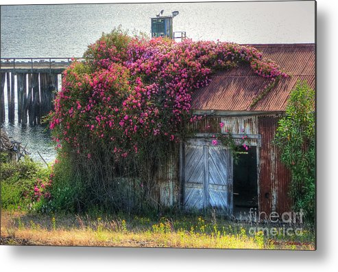 Abandoned Metal Print featuring the photograph Rose Cover by Chris Anderson