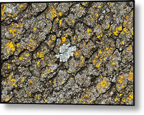 Simply Moss Metal Print featuring the photograph Simply Moss by Charles Feagans
