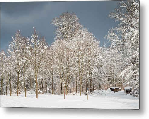 Winter Metal Print featuring the photograph Snow Covered Trees In The Forest In Winter by Matthias Hauser