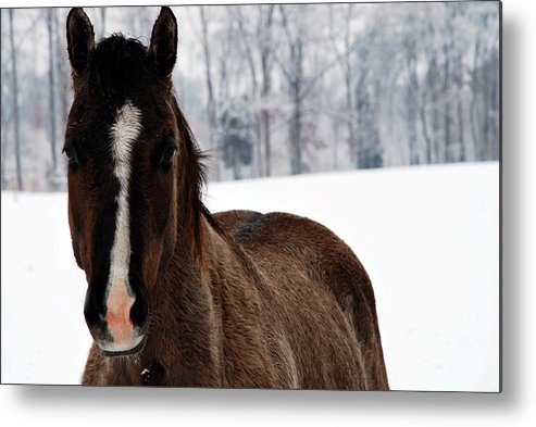 Snow Metal Print featuring the digital art Snow Horse by Linda Segerson