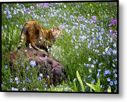 Sonoma Metal Print featuring the photograph Sonoma In The Wildflowers by Adele Buttolph