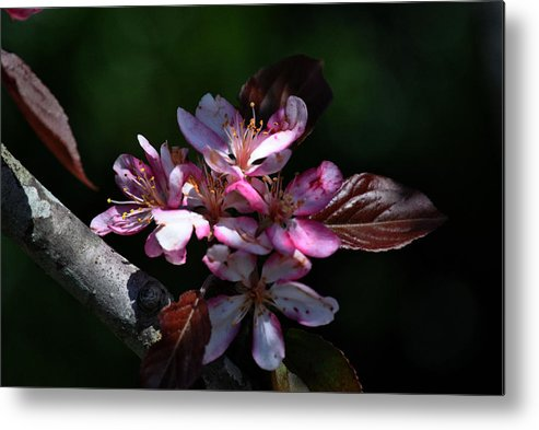 Trees Metal Print featuring the photograph Springtime by Michele Kaiser