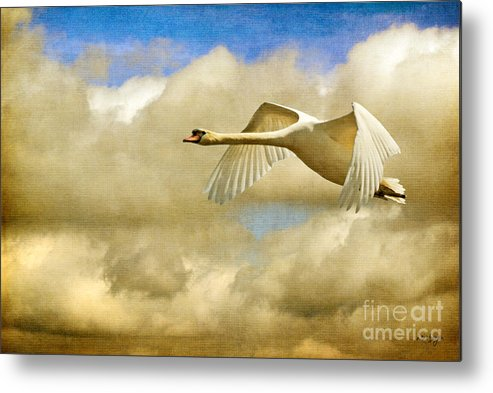 Nature Metal Print featuring the photograph Swan Song by Lois Bryan