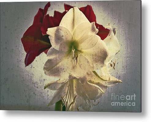 Flower Metal Print featuring the photograph The Sadness Of Snow White And Rose Red by Michaela Sibi