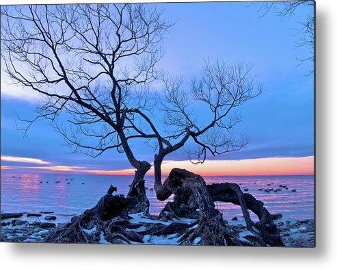 Tree Metal Print featuring the photograph Tree Hanging Over Lake - Photographers Collection by Andre Distel
