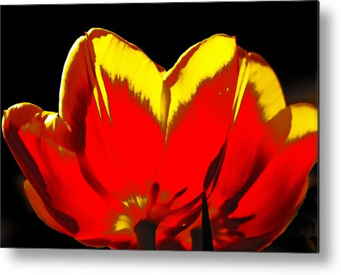Tulip Metal Print featuring the digital art Tulip Underside by Georgianne Giese