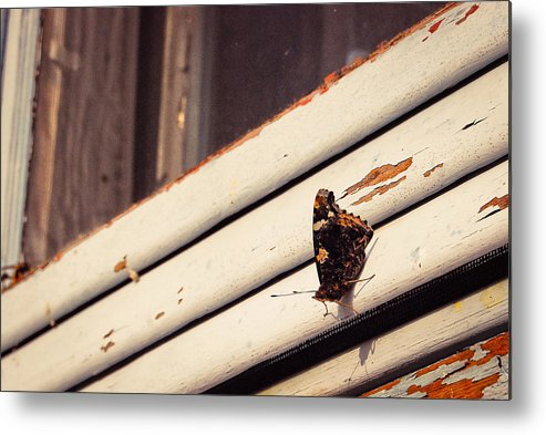 Metal Print featuring the photograph Unidentified Butterfly by Becky Anders