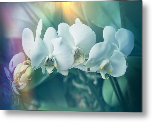Orchids Metal Print featuring the photograph White Orchids by Joyce Baldassarre