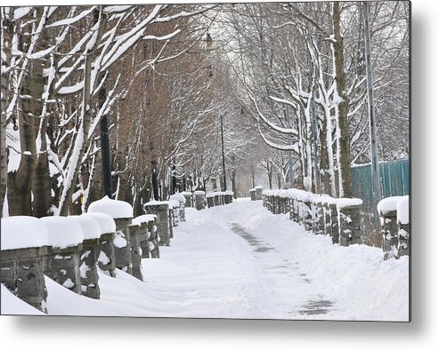 Winter Metal Print featuring the photograph Winter by Frederico Borges