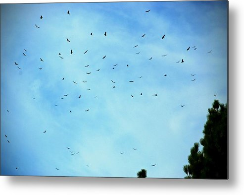 Turkey Vulture Metal Print featuring the photograph 74 Turkey Vultures by Eric Tressler