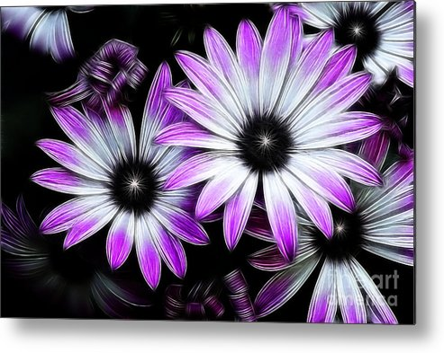 Flowers Metal Print featuring the photograph Africian Daisy by Carol A Commins
