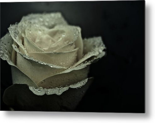 Rose Metal Print featuring the photograph Birthday Rose by Grebo Gray