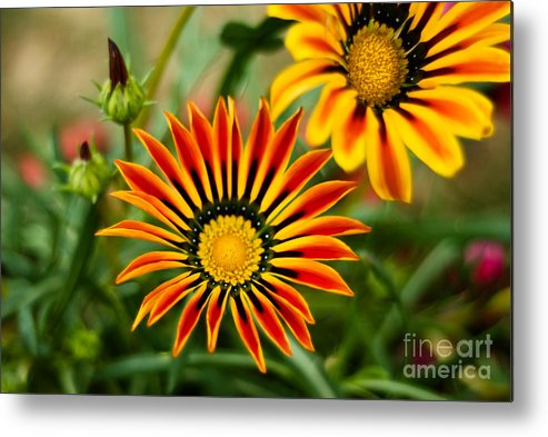 Flower Metal Print featuring the photograph Blooming Beauty by Syed Aqueel