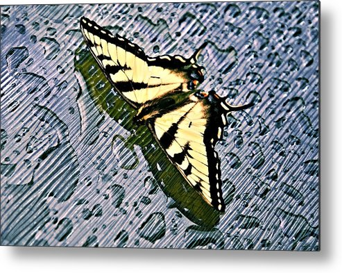 Nature Metal Print featuring the photograph Butterfly In Rain by Susan Leggett