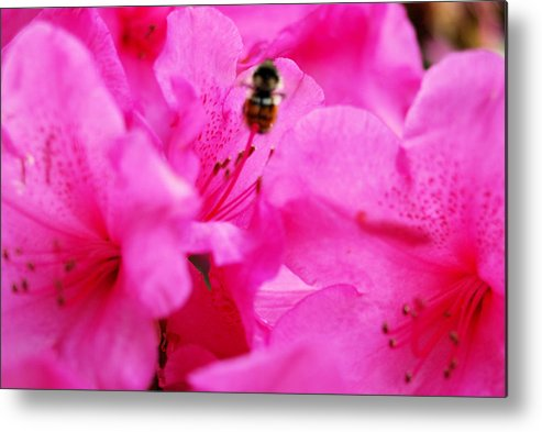 Bee Metal Print featuring the photograph Bzzzz by Michael Merry