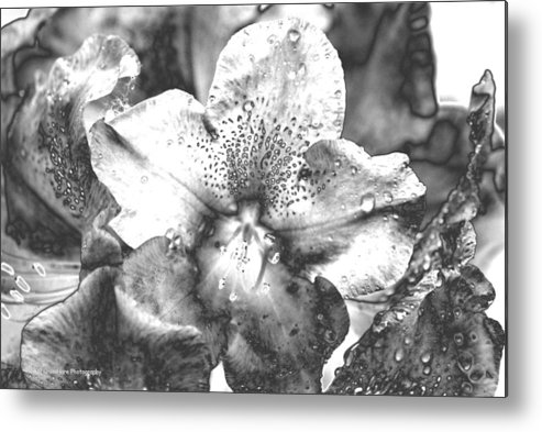 Flower Metal Print featuring the photograph Chrome Flower by Michael Merry