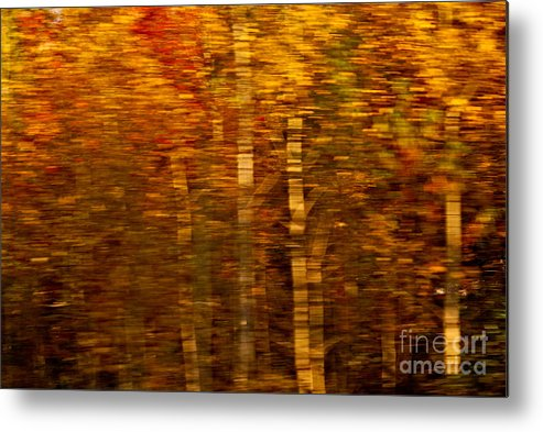 Impressionism Metal Print featuring the photograph Did You Say Trees by Aimelle