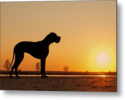 Horizontal Metal Print featuring the photograph Dog Against Setting Sun by Lily Aeneae Venema photography