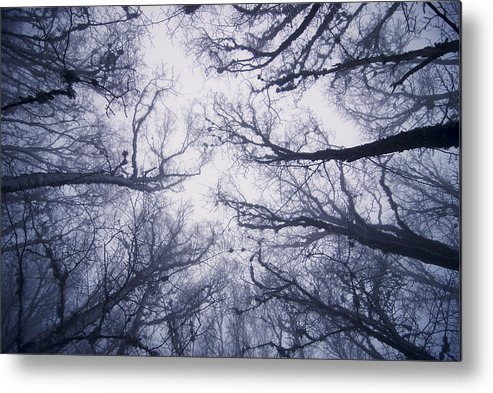 Fairy Tale Metal Print featuring the photograph Secret Forest by Zoya S