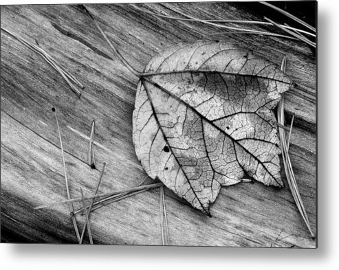 Autumn Metal Print featuring the photograph Fallen Leaf by Tony Ramos