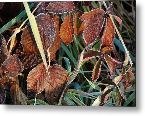 Michigan Metal Print featuring the photograph Frost On Leaves No. 2 by Janice Adomeit