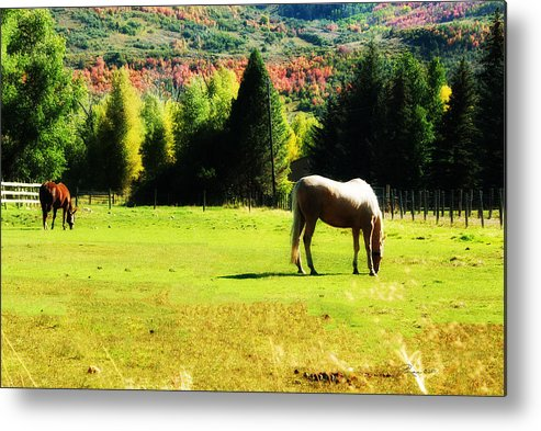 Horse Metal Print featuring the photograph Grazing Autumn by La Rae Roberts