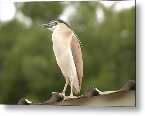 Heron Metal Print featuring the photograph Heron The Great by Peter Bone