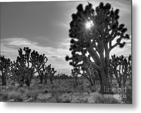 Joshua Tree Metal Print featuring the photograph Joshua Tree National Preserve by Eddie Yerkish