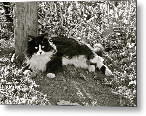Metal Print featuring the photograph Kitty In A Vineyard by Lori Leigh
