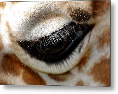 Eye Metal Print featuring the photograph Lashes On The Eye by Skip Willits
