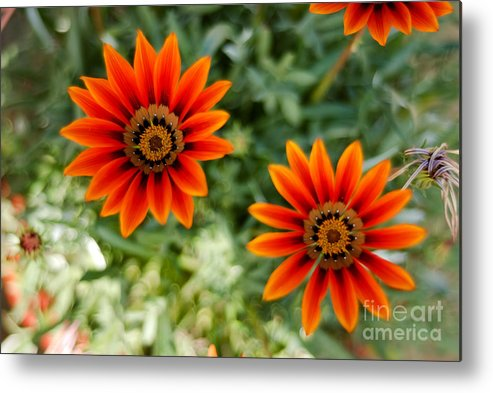 Flower Metal Print featuring the photograph Looking Alike by Syed Aqueel
