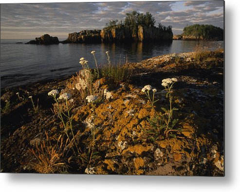 Outdoors Metal Print featuring the photograph Orange Lichen-covered Rocks At Isle by Phil Schermeister