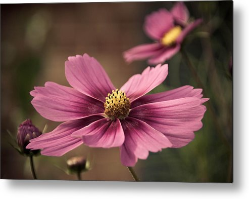 Petal Metal Print featuring the photograph Precious Pink by Trish Tritz
